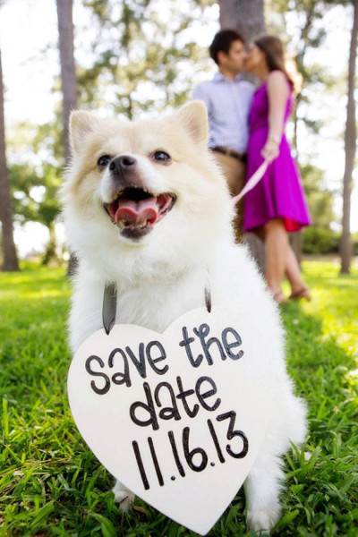 Save the date foto cane